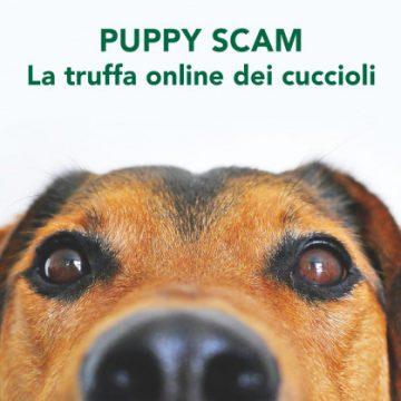 Puppy Scam: Bliss Pets denuncia la truffa della vendita di cuccioli online. I consigli per difendersi