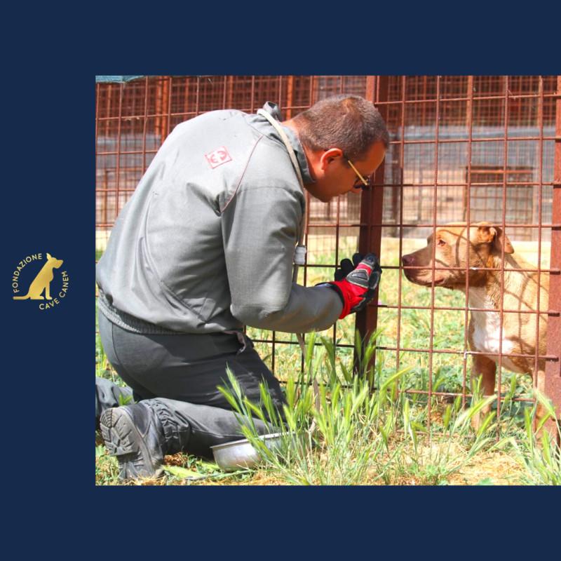 Al via i nuovi corsi di formazione promossi dall'Accademia CAVE CANEM, il progetto formativo della Fondazione CAVE CANEM ONLUS, destinato a chi lavora per gli animali o sogna di farlo.