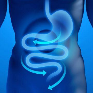 La dieta del microbiota per tornare in forma: cosa dice la ricerca scientifica?